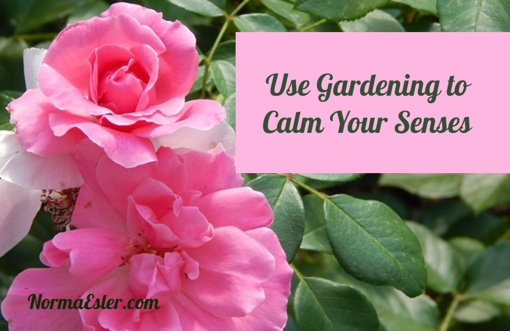 Use Gardening to Calm Your Senses